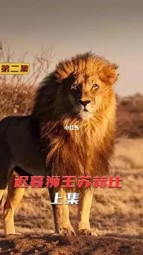 三兄弟狮群动物世界影视影视推荐视频