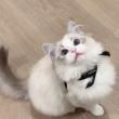 爱**猫咪